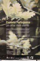 b_300_200_16777215_00_images_eventgallery_galeria_20130419_exposicao_floresta_portuguesa_IMG_4164.JPG